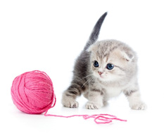 kitten playing with a ball of pink yarn